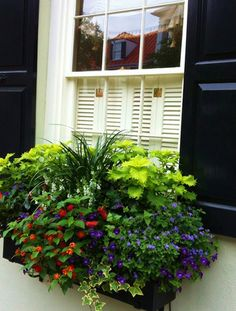 Window box in Charleston, SC via Town and Country Mom blogspot.