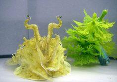 43501:    Cuttlefish imitating a plastic aquarium decoration. Adorably.
