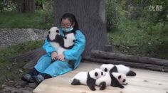"""Would you like to get paid for doing something that you like, like getting 32,000 USD for taking care of pandas all day? It may sound too good to be true, but hey, being a panda caretaker is a real job in China, specifically at the Giant Panda Protection and Research Center. I guess, being a panda caretaker could be the most enviable and fun-filled job in the country!  According to China Daily, """"Your work has only one mission: Spending 365 days with the pandas and sharing in their joys and…"""