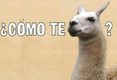 Oh, Spanish humor ;) Though, to be grammatically correct, I feel like there should be more than one llama in this pic...