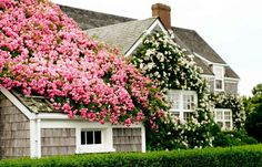 b o o k a h o l i c.  Nantucket cottage