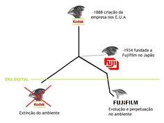Seleção Natural - Case Kodak X Fujifilm