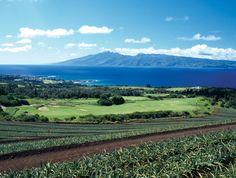 Kapalua, Maui.  Pineapple fields