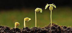 DMIDIA -Resultado de imagem para sementes nascendo #dmidia