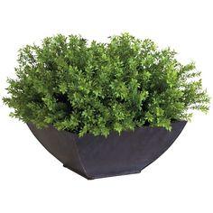 Ethan Allen Tea Leaf Bonsai (970 ILS) ❤ liked on Polyvore featuring home, home decor, floral decor, plants, fillers, flowers, decor, flower home decor, metal home decor и flower stem
