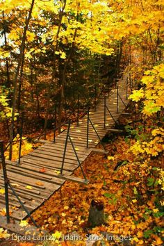 Suspension Bridge on Tubbs Hill amongst the fallen autumn leaves
