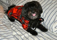 Cuba wearing Lola Canine Couture PJs. Find us on PawVogue.com