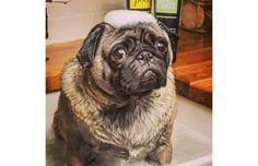 27 Hilariously Sad Dogs Who Do Not Want A Bath (Slide #44) - Pawsome