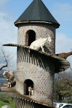 I will build my own mini goat tower for the Nigerian dwarf dairy goats that I will have someday.