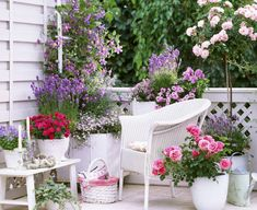 Small Rose Garden Growing Roses in Containers Balcony Patio and Terrace