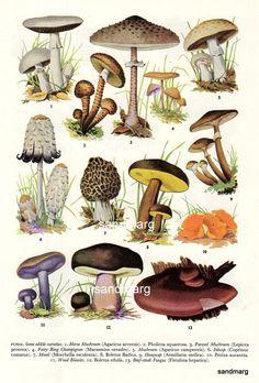 Vintage Edible Mushrooms