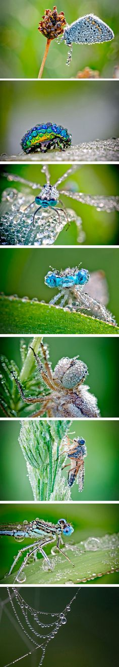 Dewy insects