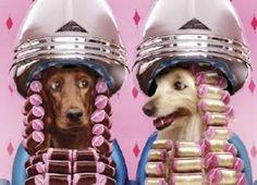 Dog hair parlour is the ticket! #dog #hair #salon