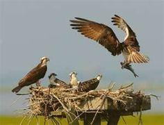 birds of prey - Bing Images