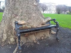 Bench-eating Tree | Flickr - Photo Sharing!