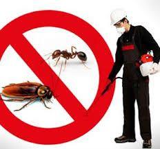 شركة مكافحة حشرات بالاحساء0503276813 خصومات تصل ل25% فنحن تستخدم افضل المبيدات الحشرية للقضاء النهائي على الحشرات لذلك نحن افضل شركة مكافحة حشرات بالاحساء