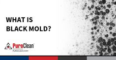 Learn what black mold is, where it grows, and how to remove and prevent it. #MoldSafety