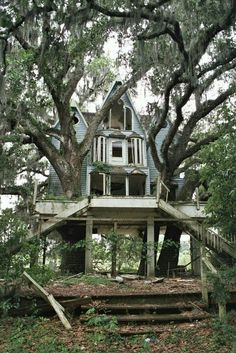 Abandoned house. Would be so cool to renovate and incorporate the trees growing through it!: