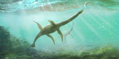 Prehistoric Animals, Free Prints, Reptiles, Fossil, Whale, Extinct, Hipster, Posts, Content