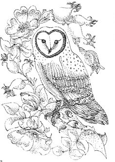 owl colouring page my coloring pages pinterest coloring colouring pages and coloring pages