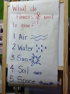 TK TSGI Sensory and Communication Preschool: What do plants need to grow?