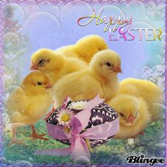 Baby Chick Happy Easter Picture easter easter chicks happy easter easter image quotes easter sayings cute easter quotes Easter Quotes, Easter Sayings, Boy Nursery Colors, Baby Announcement To Husband, Baby Shower Favors Girl, Minimalist Baby, Baby Names And Meanings, Easter Pictures, Baby Girl Bedding