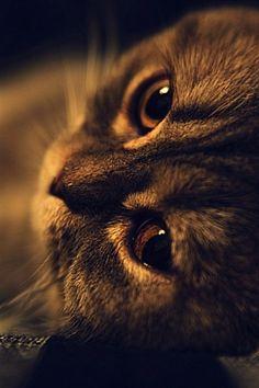 Soft Kitty by karin deidre naude