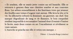 Aurochs Rouge - Chimeterre T1 par Tibéon Citation 08