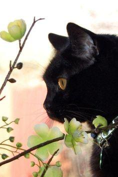 Pretty black kitty ♥