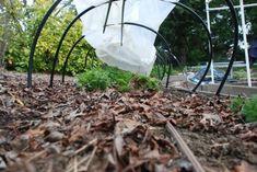 Szórj szódabikarbónát a kertedbe, bámulatos lesz a hatás! - Ripost Organic Mulch, Gardening Tips, Grass, Leaves, Composting, Stems, Plants, Wisdom, Vegetables