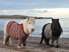 I'm Literally Having Heart Palpitations From The Cuteness Of This Pony Sweater Situation