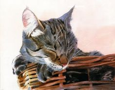 "Rachel's Studio Blog: New art - tabby cat watercolor painting ""Basket Case"""