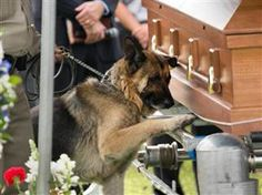 Police dog bids touching farewell to fallen human partner, Kentucky police officer Jason Ellis, who was killed in a suspected ambush.