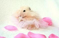 Little hamster in tutu
