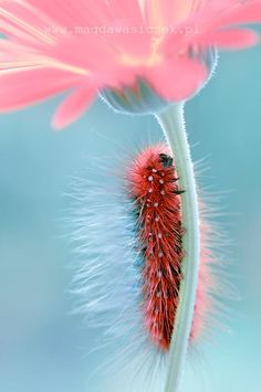 caterpillar, Amazing nature photography by Magda Wasiczek via Pelfind