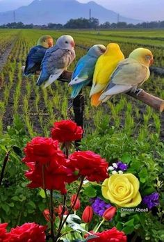 Good Morning Beautiful Pictures, Good Morning Flowers, Morning Pictures, Beautiful Morning, Good Morning Images, Xperia Wallpaper, Color Wallpaper Iphone, Pretty Birds, Beautiful Birds