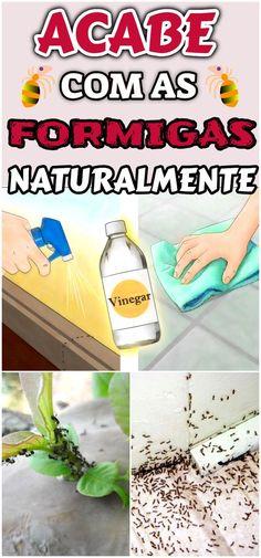 Veja como acabar com as formigas de maneira sustentável, sem prejudicar a saúde e o meio ambiente. #dicas #truques #receitas #caseiro #dicascaseiras #remediocaseiro #acabecomasformigas #formigas