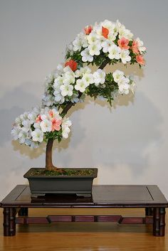 JPB:Bonsai Collection5 | Satsuki Azalea (Rhododendron indicum) 'Asahi-no-izumi' | Flickr - Photo Sharing!