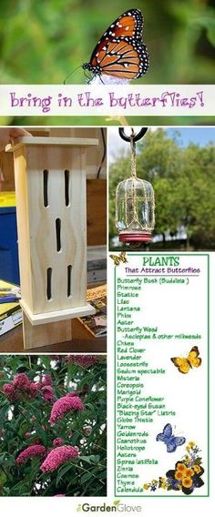 Bring in the Butterflies • Tips, Ideas, Projects and Tutorials on how to attract butterflies to your garden and yard! by Seriously?