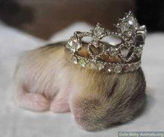 Tiny Tiara   Community Post: Tiny Hamsters Wearing Tiny Clothes