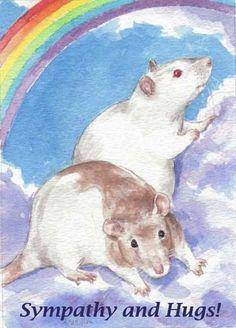 Two Rats Sympathy