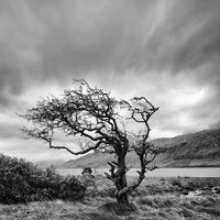 Windblown Tree in Connemara Ireland Connemara Ireland, Images Of Ireland, Tree Carving, Cottages By The Sea, Travel Around, Beautiful Images, Cool Photos, Trees, Country Roads