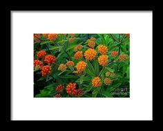 orange, flower, bloom, blossom, nature, garden, michiale, schneider, photography