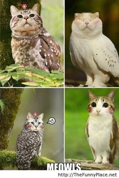 What do you get when you combine a cat with a owl?