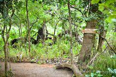 De Uijlenes, forest, wedding venue.