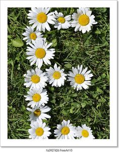 """""""E - Letters of daisies"""" - Art Print from FreeArt.com"""