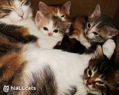 So similar! #cute #cat #purr #cats