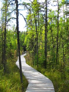 Saskatchewan's mysterious, ancient bog world - Prince Albert National Park, Saskatchewan Saskatchewan Canada, Canadian Travel, Lake Photos, Western Canada, Canada Eh, Parks Canada, Visit Canada, Prince Albert, Places To See
