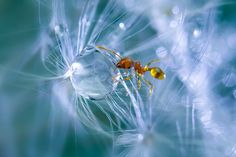 A macro view of an ant caught in a web of spores and a water droplet in Obihiro, Japan. Animal-Lover Miki Asai has gone a step beyond feeding bread to the ducks – by syringe-feeding water to tiny ants. The office worker from Obihiro City, Japan, squirts droplets near the tiny insects and then uses a macro lens to capture quenching their thirst. The amateur photographer started capturing these images near her house in July 2013 after spotting an ant struggling in the rain. (Photo by Miki…