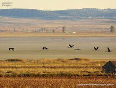Un país para recorrérselo: La Laguna de Gallocanta, Teruel-Zaragoza, Aragón